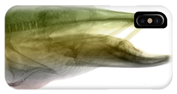 X-ray Of Muskie IPhone Case