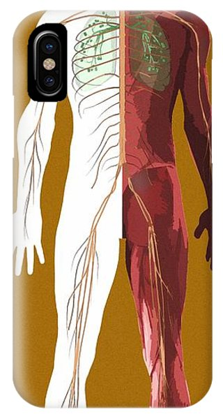 Human Anatomy, Artwork Phone Case by Mehau Kulyk