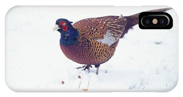 Common Pheasant Phone Case by David Aubrey