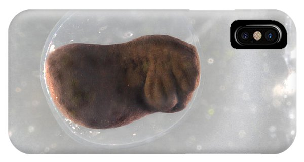 Frog Egg Development Phone Case by Dr Keith Wheeler