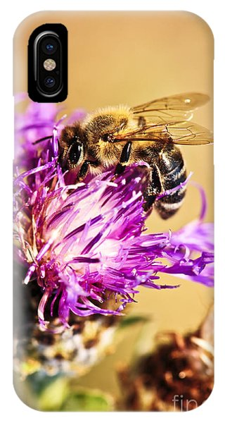Honeybee iPhone X Case - Honey Bee  by Elena Elisseeva