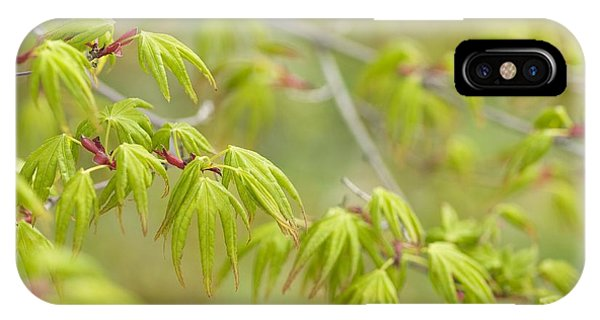 Japanese Maple (acer Palmatum) Phone Case by Adrian Bicker