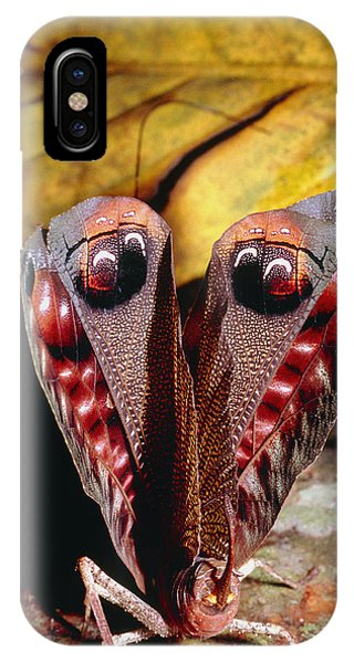Leaf-mimic Bush Cricket Phone Case by Dr George Beccaloni