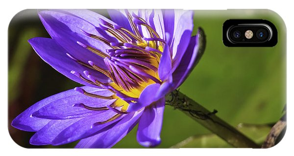 Nymphaea 'panama Pacific' IPhone Case