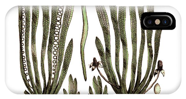 Page From Darwins Botanic Garden IPhone Case