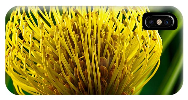 Picture Of A Pincushion Protea IPhone Case