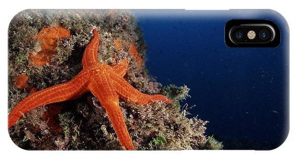 Starfish Phone Case by Alexis Rosenfeld