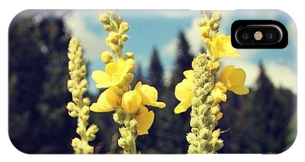 Beautiful iPhone Case - Yellow Flowers by Luisa Azzolini