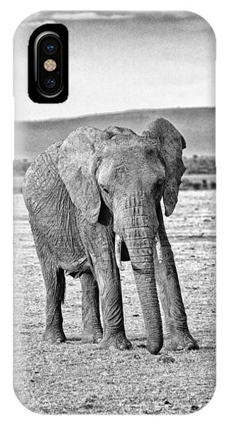 African Elephant In The Masai Mara IPhone Case