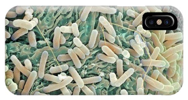E. Coli Bacteria, Sem Phone Case by Steve Gschmeissner