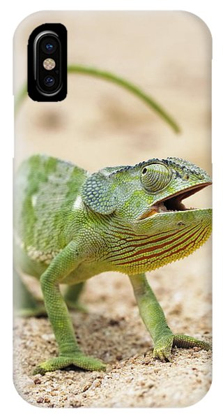 Flap-necked Chameleon Phone Case by Georgette Douwma