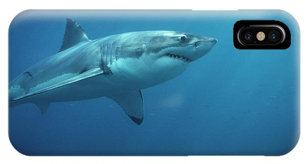 Great White Shark Carcharodon IPhone Case