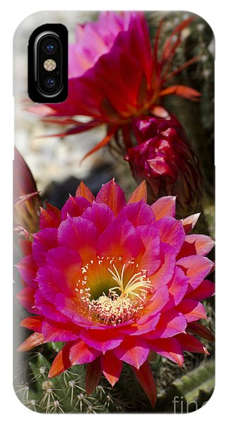 Pink Cactus Flowers IPhone Case