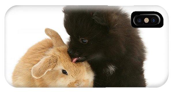 Pomeranian iPhone Case - Rabbit And Pup by Jane Burton