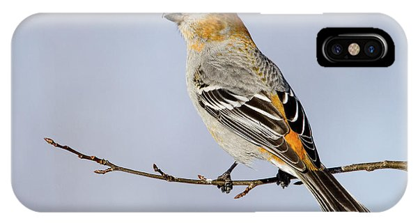 Female Pine Grosbeak IPhone Case