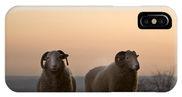 Farm iPhone Case - The Lamb by Angel Ciesniarska