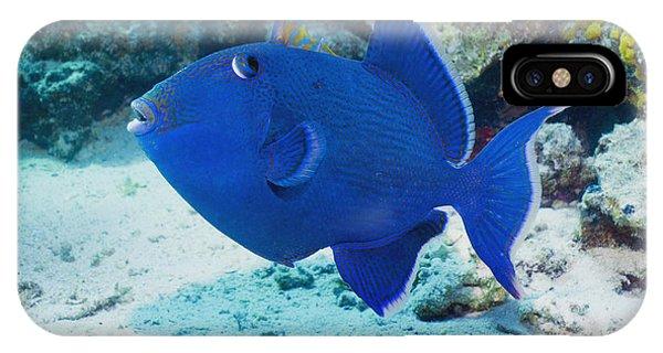 Blue Triggerfish Phone Case by Georgette Douwma