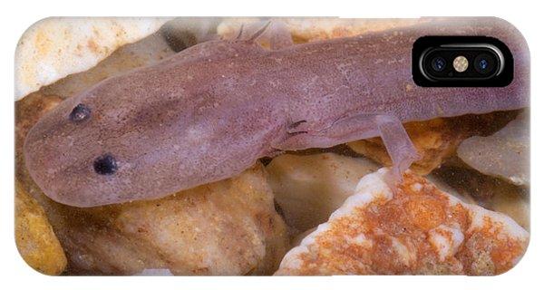Ozark Blind Cave Salamander IPhone Case