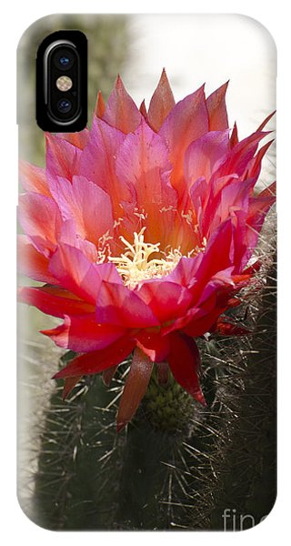 Red Cactus Flower IPhone Case