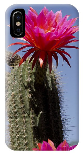 Pink Cactus Flower IPhone Case