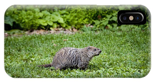 Groundhog iPhone Case - A Groundhog Marmota Monax Enjoys A Meal by Stephen St. John