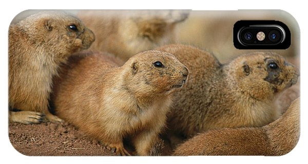 North Dakota Badlands iPhone Case - A Group Of Prairie Dogs Cluster by Annie Griffiths