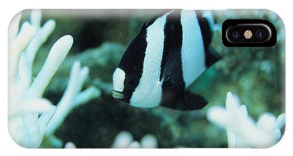 A Humbug Dascyllus Fish Swims IPhone Case