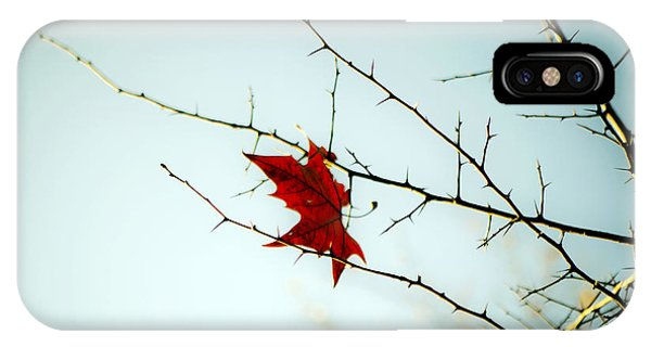 Deciduous iPhone Case - A Leaf by Joana Kruse