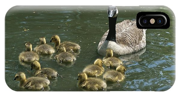 Catoctin Mountain Park iPhone Case - A Mother Canada Goose Watches Over Ten by Stephen St. John
