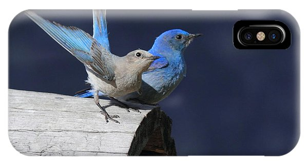 A Pair Of Bluebirds IPhone Case