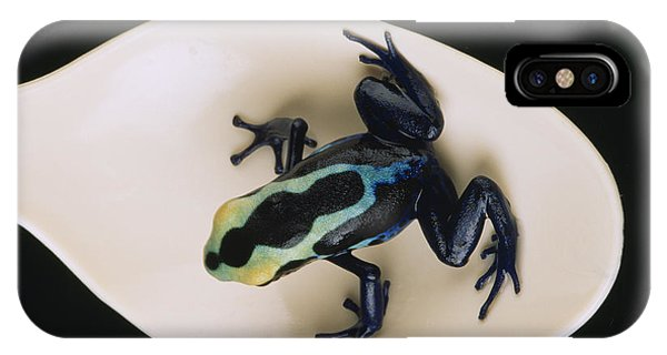 A Poison Dart Frog Rana Species Sits IPhone Case