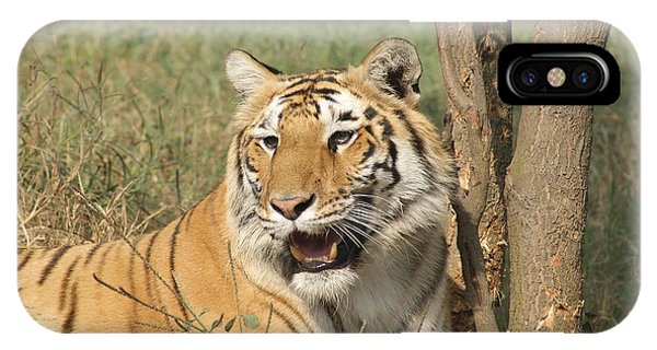 A Tiger Lying Casually But Fully Alert IPhone Case