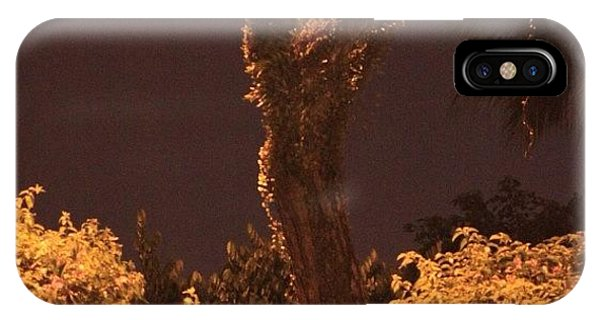 Political iPhone Case - A Tree Lonely At Night, By My Lens by Ahmed Oujan