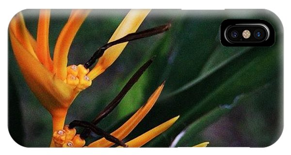 Political iPhone Case - A Tropical Flower, Humming Birds Feed by Ahmed Oujan