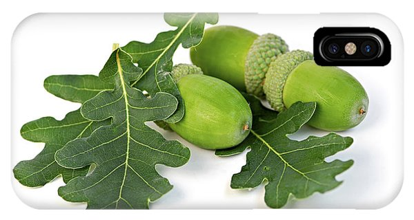 Acorns With Oak Leaves IPhone Case