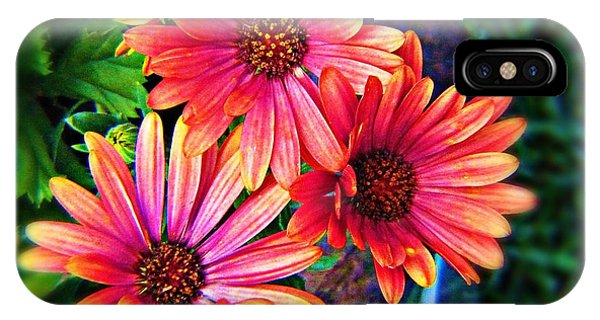 IPhone Case featuring the photograph African Daisy by Deahn      Benware
