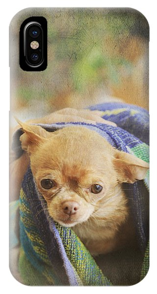 Chihuahua iPhone Case - After The Bath by Laurie Search