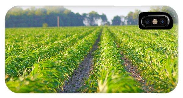 Agriculture- Corn 1 IPhone Case