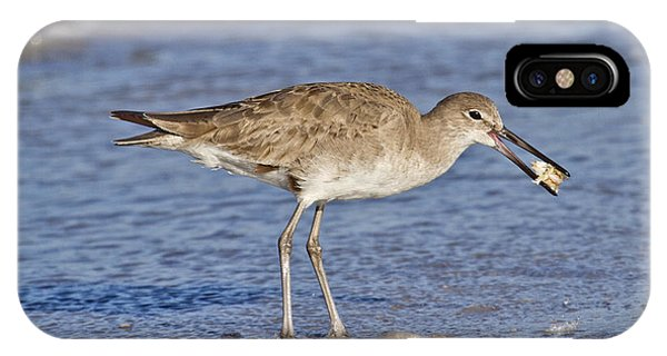 Sandpiper iPhone Case - All In A Day by Betsy Knapp