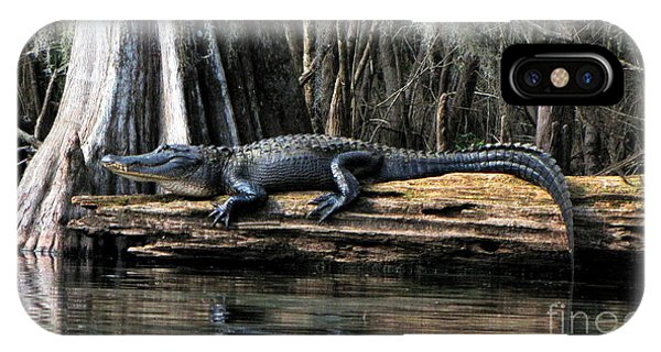 Alligator Sunning IPhone Case