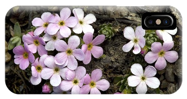 Alpine Rock-jasmine (androsace Alpina) Phone Case by Bob Gibbons