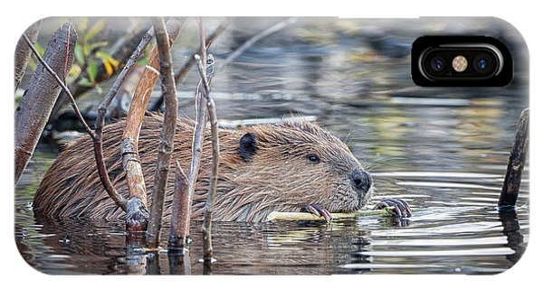 American Beaver IPhone Case
