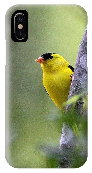 American Goldfinch - Peaceful IPhone Case