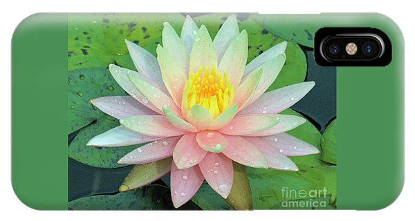 American Water Lilies Nine IPhone Case
