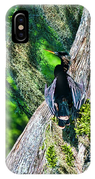 Anhinga On A Cyprus Phone Case by Frank Feliciano