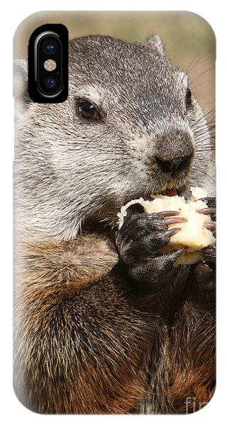 Groundhog iPhone Case - Animal - Woodchuck - Eating by Paul Ward