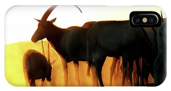 Antelope At Sunset IPhone Case