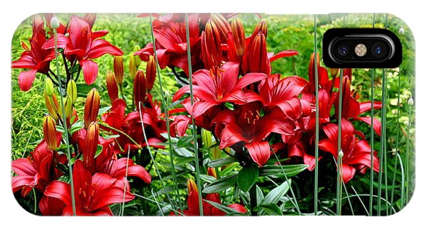 Asiatic Lilies 2 IPhone Case