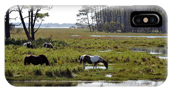 IPhone Case featuring the photograph Assateague Wild Horses Feeding by Dan Friend