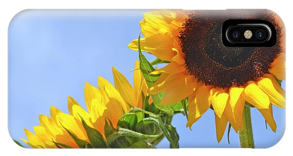 August Sunshine IPhone Case